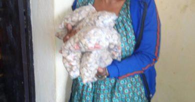 Rubavu: Polisi yafatanye umugore udupfumyika 800 tw'urumogi arwambariyeho